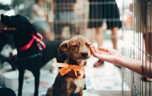 How to adopt a dog from Thailand_featured