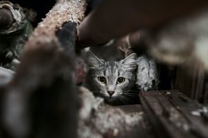 Stray cats in Thailand_featured